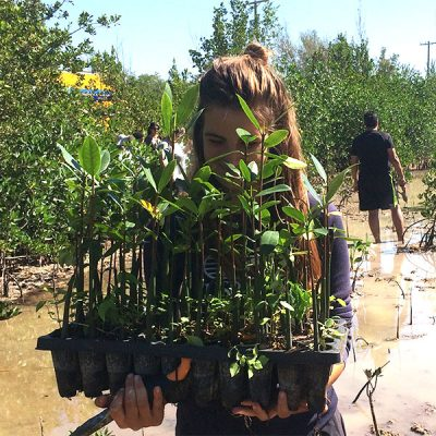 A woman stands with her face peeking out from behind a tray of young mangroves waiting to be planted.