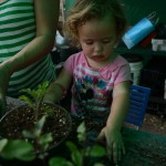 YP Gardening