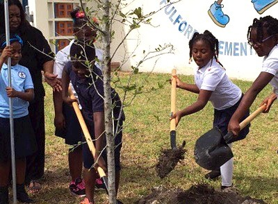 Students at Fulford Elementary School in North Miami Beach plant a tree that will add shade and wildlife to their campus.
