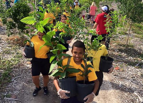Volunteers carry potted trees to the planting site.