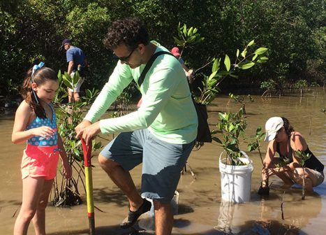 Teenagers and youth volunteers use shovels to plant mangrove propagules in ankle deep water.