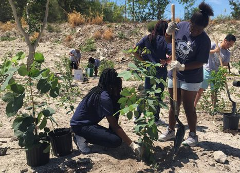 A group of students plants native hammock trees in a recently cleared area.
