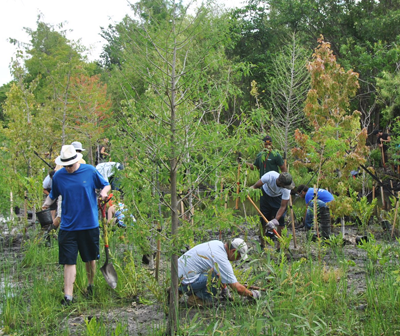 A group of volunteers clears invasive vegetation in a coastal forest.
