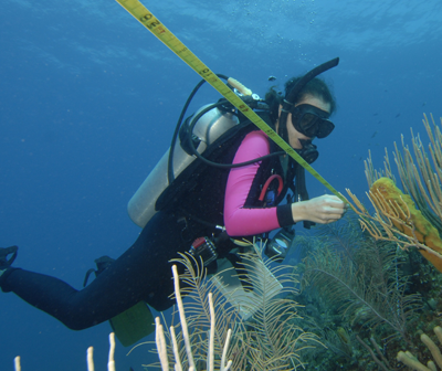 A diver reads a transect measuring tape while examining a coral reef.