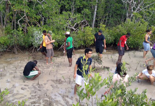 From above, a group of volunteers works to plant mangrove propagules in a creek bed,