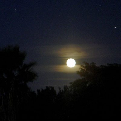 A full moon is seen in a dark blue sky over the shadow of trees.