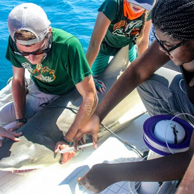 Two professionals help a young woman in the Upward Bound program prep a shark for tagging.