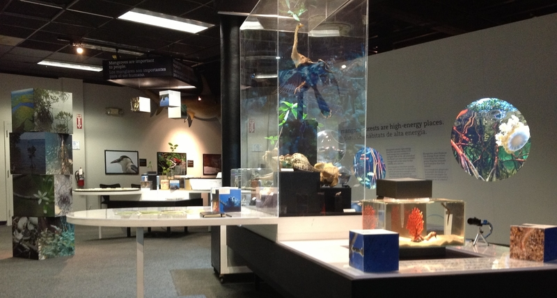 View of the museum exhibit room