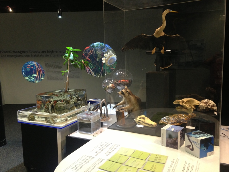 Fish tanks, mangrove muck, and puzzles, Oh My!
