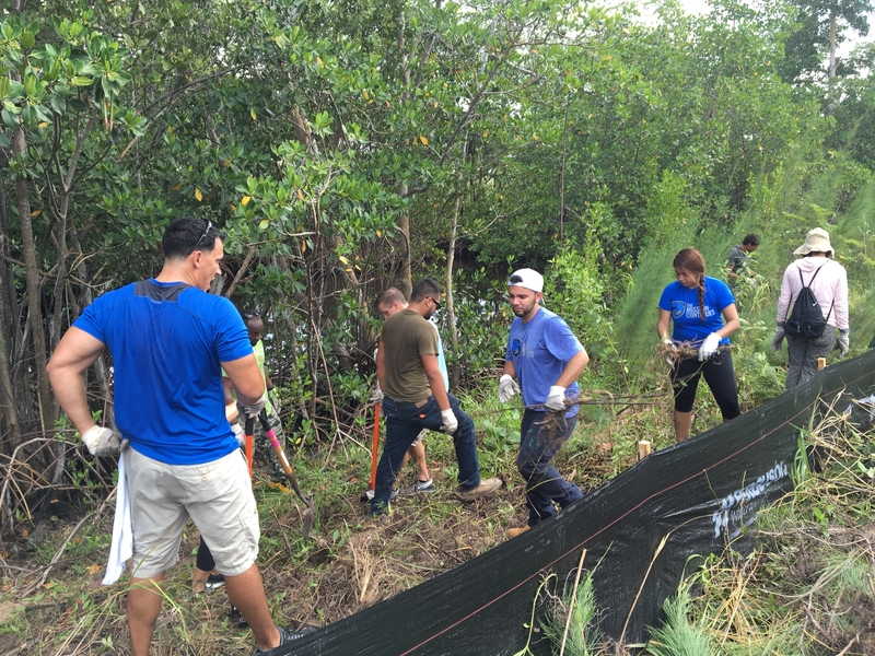 The Mission Continues Group remove invasive plants including Australian Pine and Burma Reed from the restoration site at the Batchelor Environmental Center