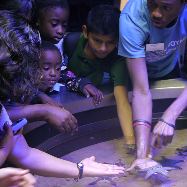 Children observing and touching starfish