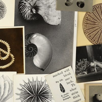 An array of vintage photos