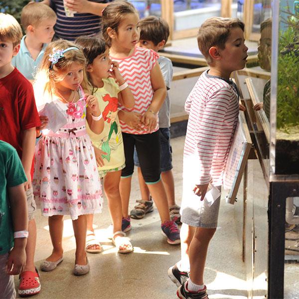 Small children observing an exhibit
