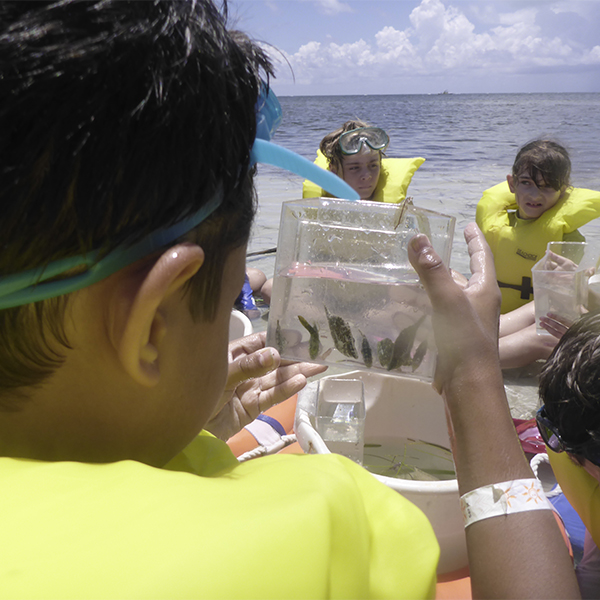 Children observing small sea animals at the beach