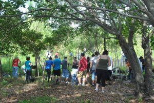 Everyday Citizens: Highland Oaks Cypress Wetland Restoration (May 12, 2012)