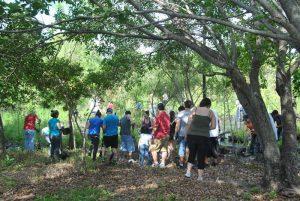 Everyday Citizens: Highland Oaks Cypress Wetland Restoration (May 12, 2012)