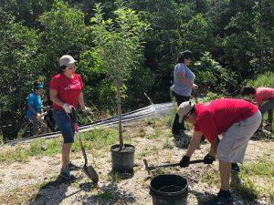 Everyday Citizens: Tree Planting 1