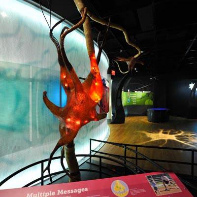 Brain Giant Neuron