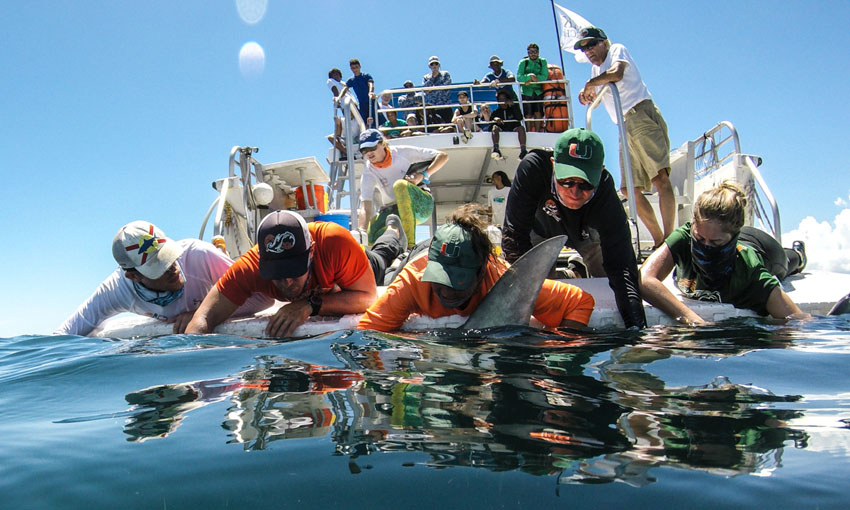 Students Catch Shark