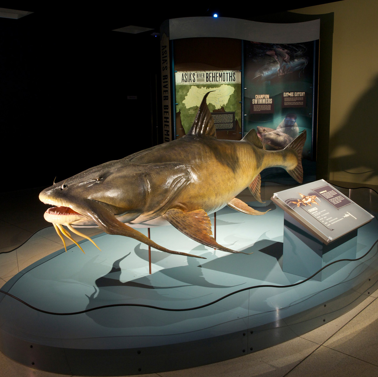 Monster Fish Exhibit