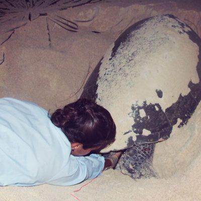 Woman Helping Sea Turtle