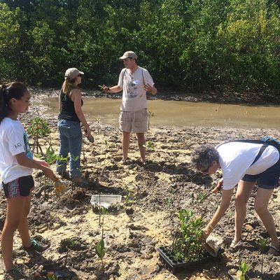 Four people planting mangrove seedlings.