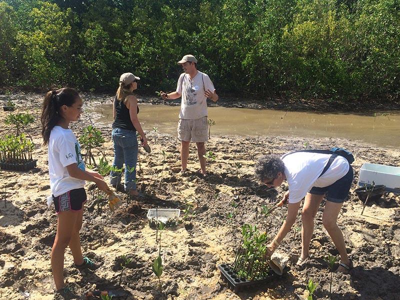 Four people planting mangrove seedlings.