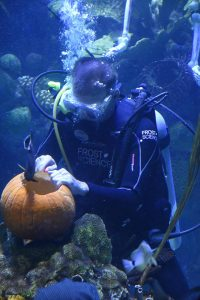 diver-carving-pumpkin-2