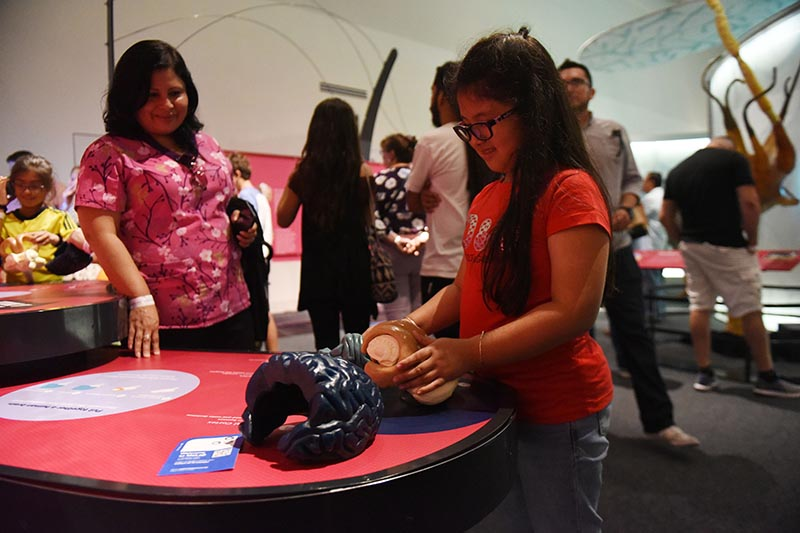 Young girl holding brain model in Brain: The Inside Story exhibit.