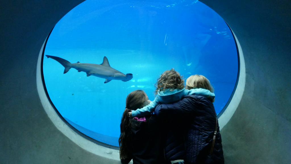 family looking into aquarium with shark