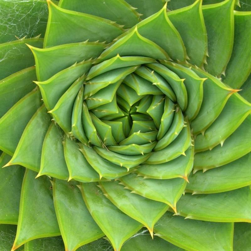 green spiky plant