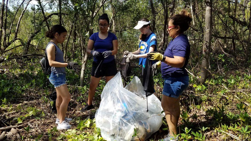 Volunteers removing marine debris from a mangrove wetland.