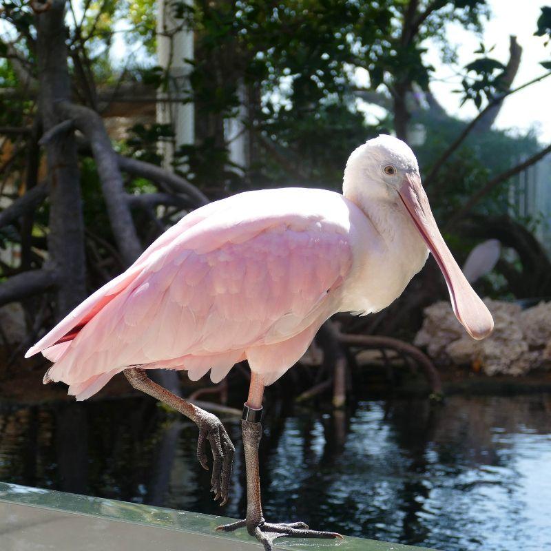 pink bird from Florida