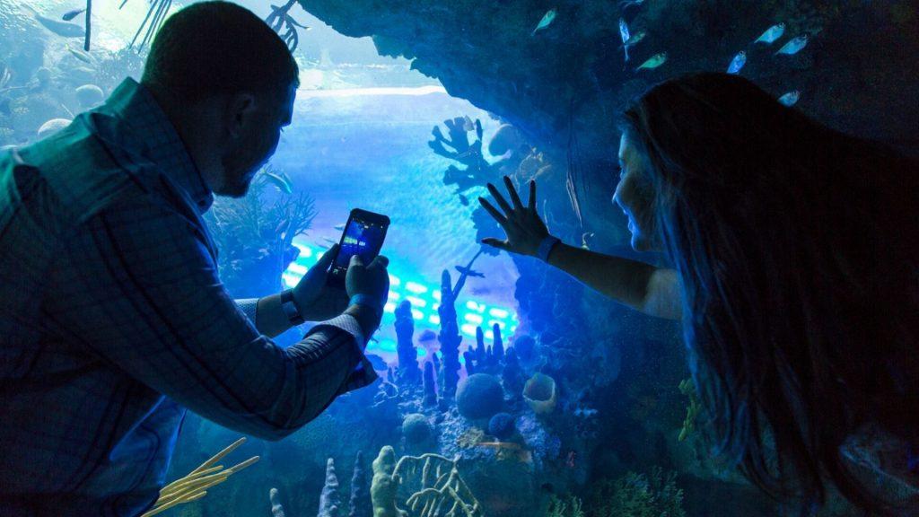 adult overnight aquarium