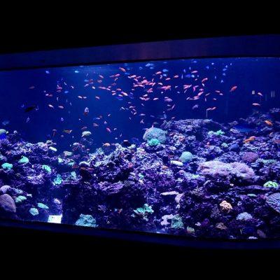 aquarium with fish and coral