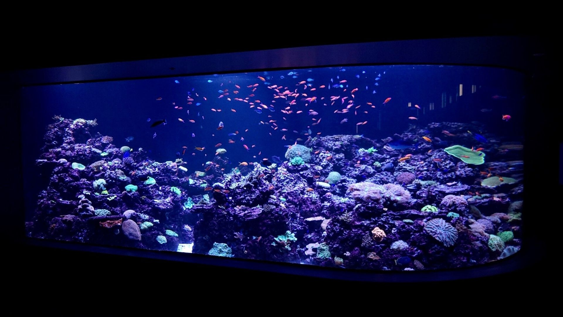 aquarium with fish and coral