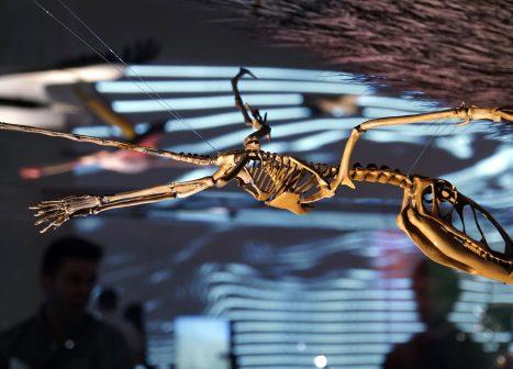 Skeleton of prehistoric flying reptile.