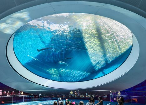 Guests view the Gulf Stream Aquarium through the Oculus.