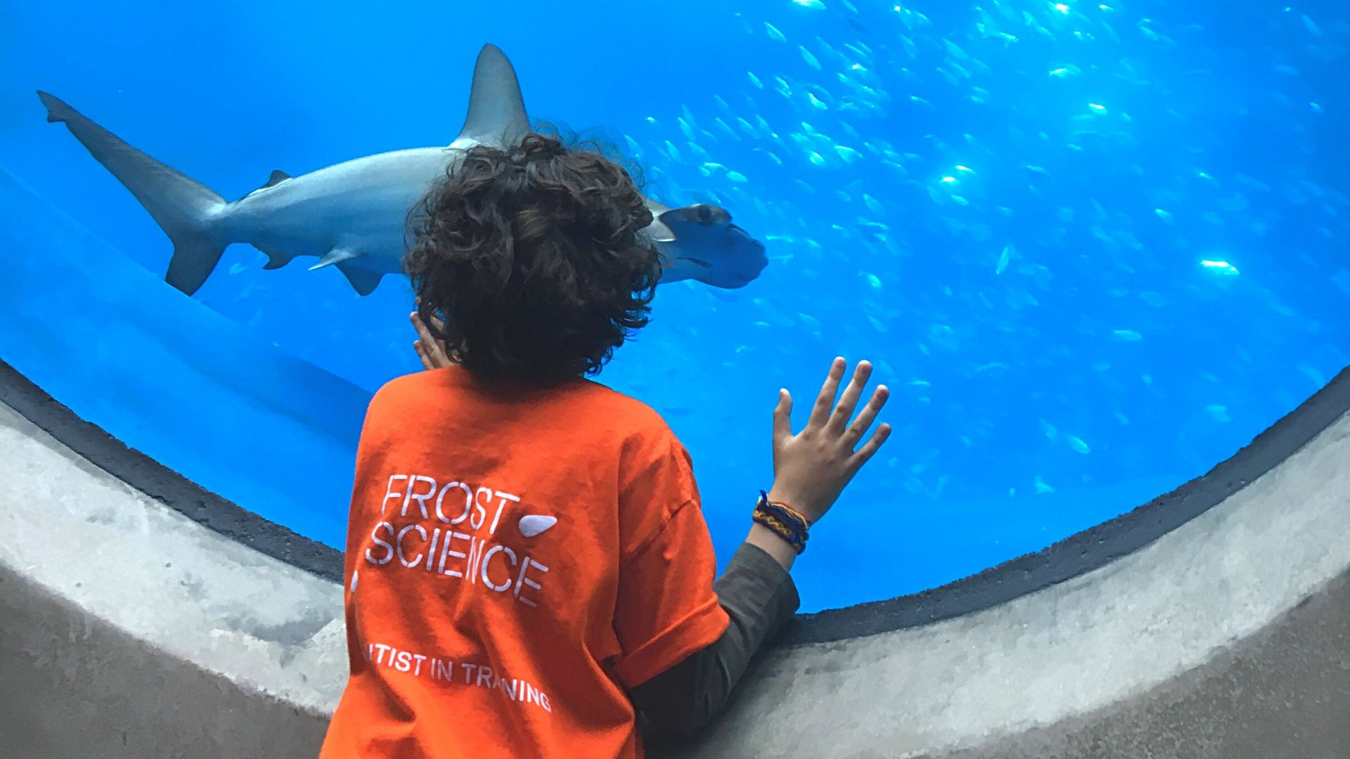 Child looking at shark in Frost Science Gulfstream Aquarium.