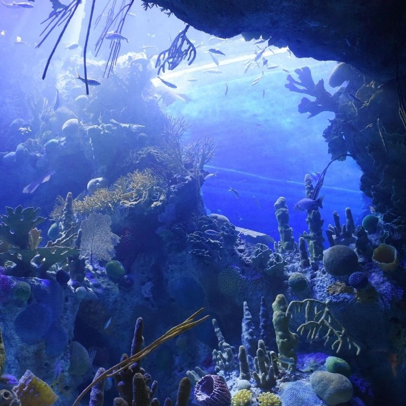underwater image of in the ocean