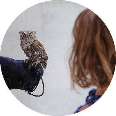 Small owl perched on gloved hand.