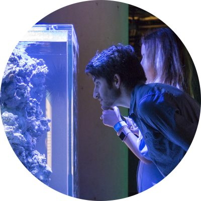 Man looking into aquarium.
