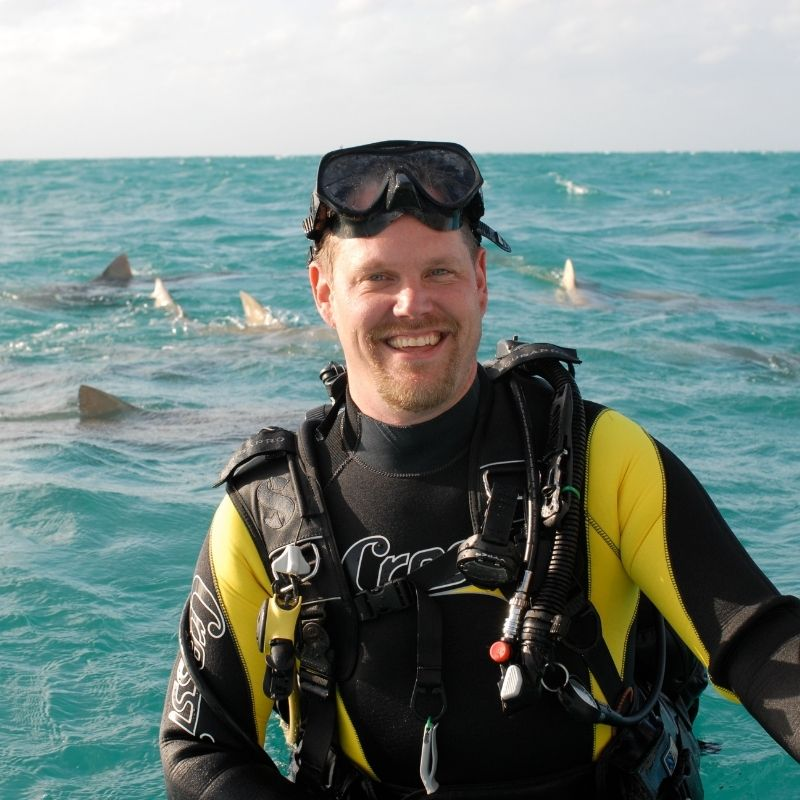 image of man in scuba gear with sharks in the background ocean