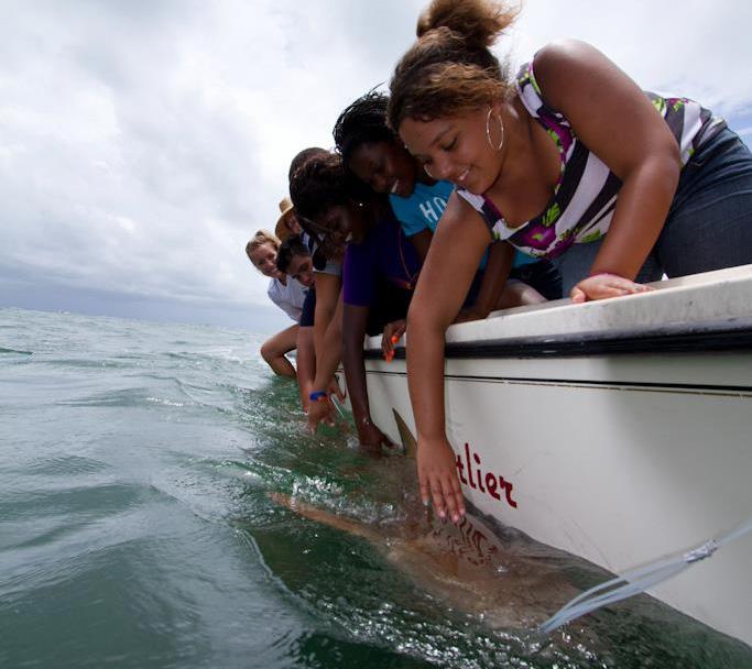 Upward Bound Math and Science program tagging a shark.
